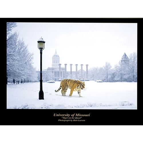 "Mizzou ""Tiger On Quad"" Matted Print"